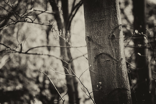 Angry tree >:(