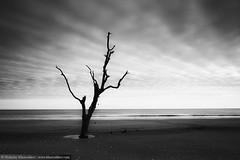 Black and white photo of Botany Bay beach