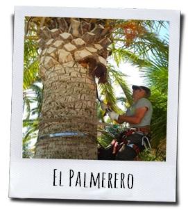De speciaal opgeleide palmenverzorger