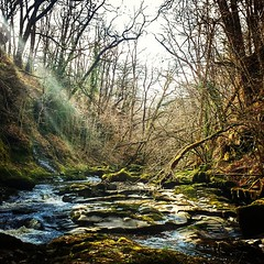 #Nature is #amazing! #pristine #forest in South #Wales. #today #scout #adventurephotography #pedropimentelvisuals