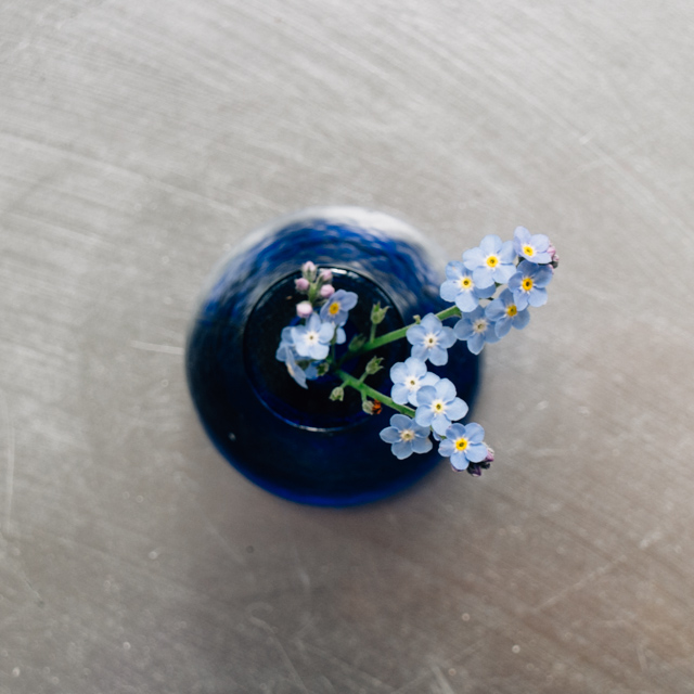 forget me nots in small blue vase
