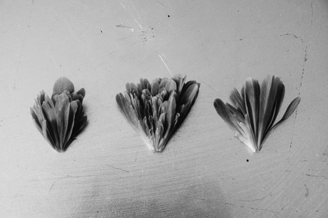 photo of flower broken into pieces