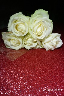 The white roses on the red background.