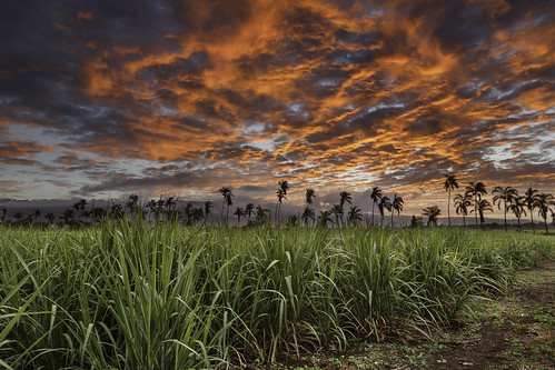 sunset clouds canon palms burning palmiers coucherdesoleil laréunion reunionisland bamb océanindien canneàsucre îledelaréunion bamb974