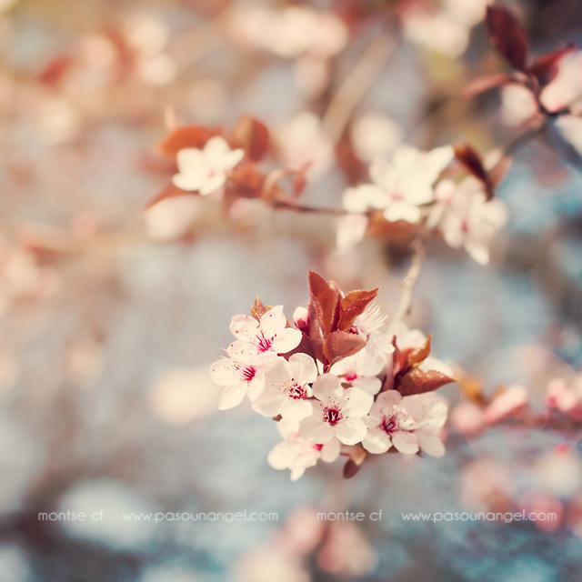 primeras flores+