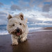 Baxter's Beach Adventure by f22 Digital Imaging