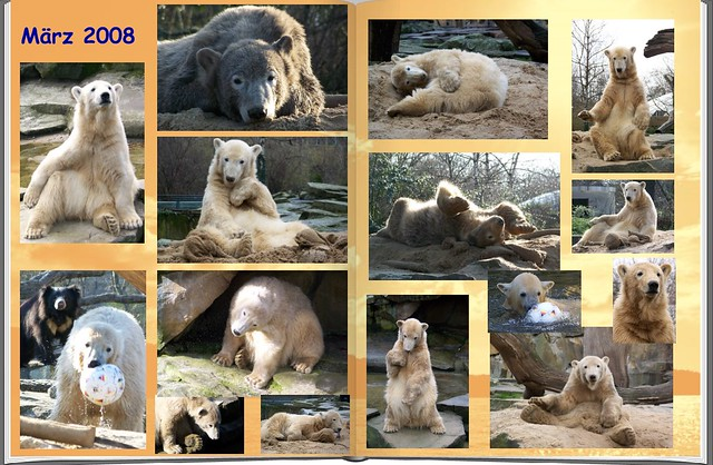 2008_03 Eisbär Knut