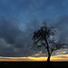 Tree sunset by Christian R. Hamacher (Je suis Charlie)