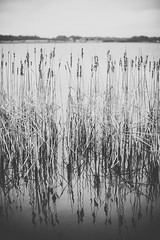 Reflections of bent grass