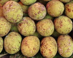 Breadfruits (IMG_1204ed_b)