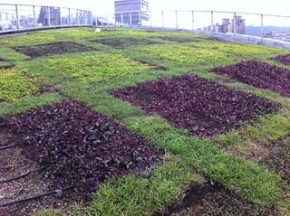 新莊體育場的綠屋頂。圖片由peterman167提供