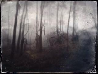 TinType Trees