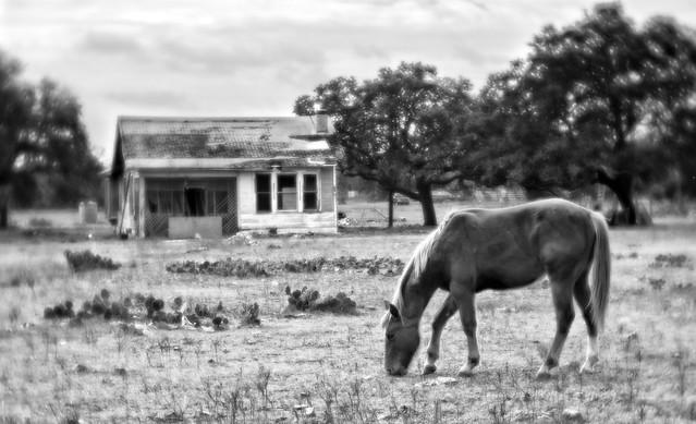 Velvet Horse