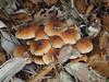 Photo:Mushrooms By Sudachi