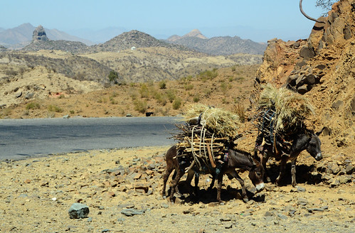 eritrea эритрея ertra erythrée إرتريا erythrea ኤርትራ eritra habesha anseba ዞባዓንሰባ zobaanseba regionanseba ዓንሰባ landschaft pejsaz paysage landscape paisaje ландшафт пейсаж kebesa kebessa hochland highland esel burro donkey osel âne aditekliezan habrenqaqa balwa