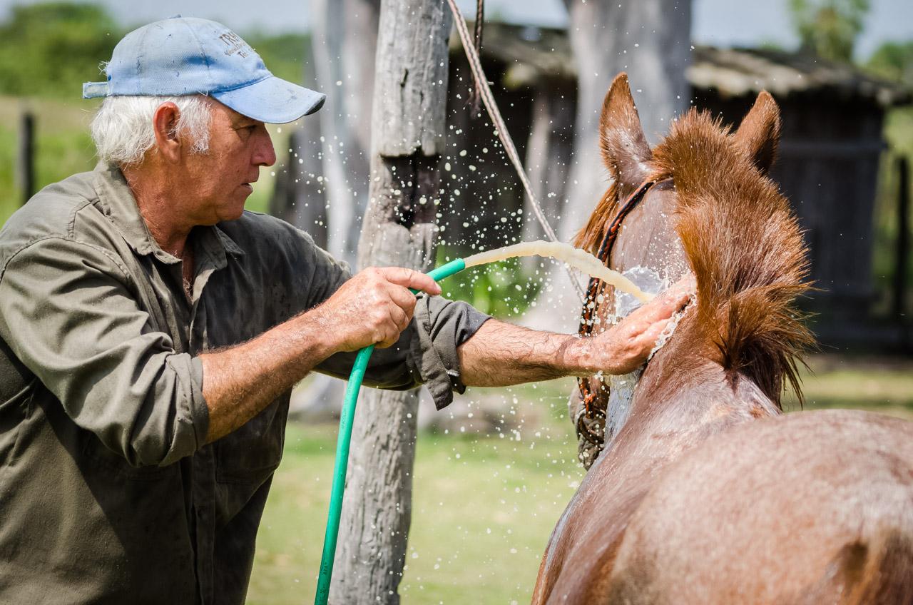 Un vaquero de la estancia Santa Teresa refresca a su caballo luego de una prolongada cabalgata por los esterales, rutina diaria para el control del ganado que pasta. (Elton Núñez)