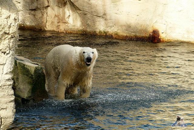 Zoo am Meer 07.03.2015   39