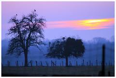 ambiance savane - Photo of Kirrberg