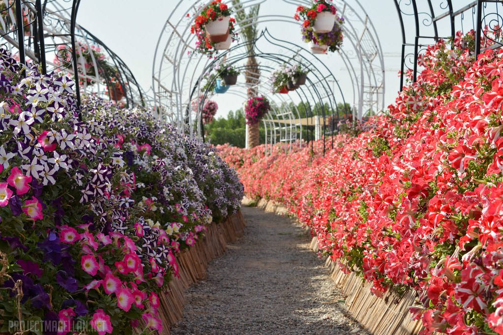 Miracle Garden, Dubai, United Arab Emirates, UAE