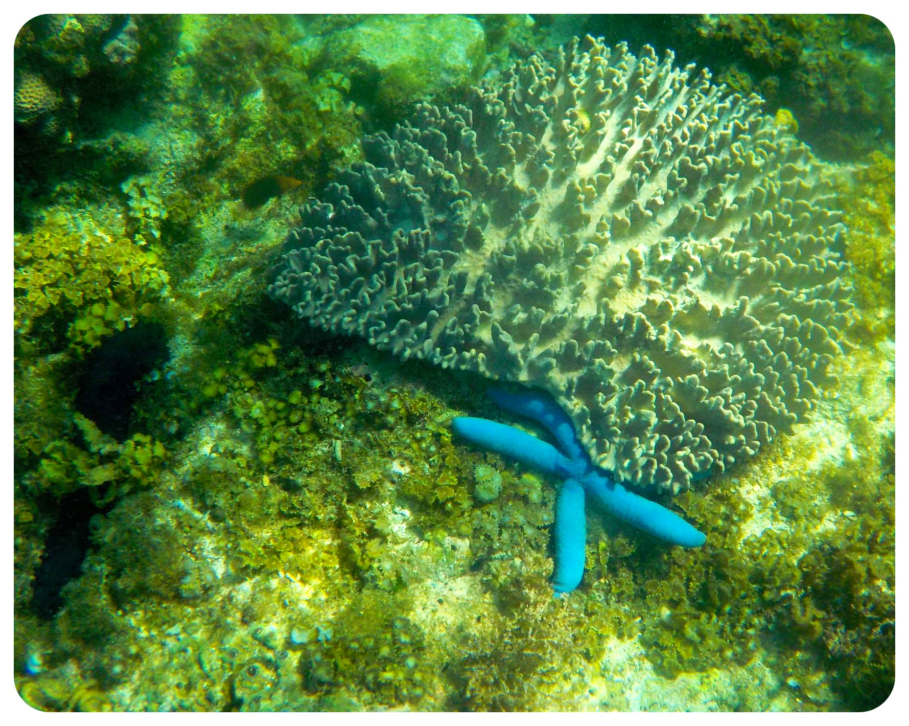 underwater apo island philippines
