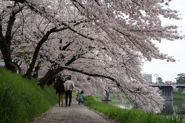 Okazaki_Sakura_103