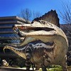 Guys. Check it out: There was a dino BIGGER than T-Rex. Spinosaurus. Lived on land and water. No joke.  #spinodino