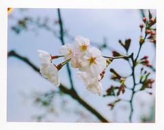 [Polaroid] Spring