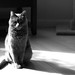 Le Chat Noir by Angelina.Maria
