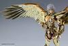 [Imagens] Saint Cloth Legend - Aiolos de Sagitário 17246230341_af6564ab4a_t