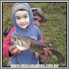 Pescaria também é brincadeira de criança. Na foto, o pequeno Paulo, de 5 anos de idade, com a sua primeira traíra fisgada em Capela do Alto-SP.  Claro que o titio ajudou a segurar para não correr o risco de se machucar com os dentes do peixe.  Pesca espor