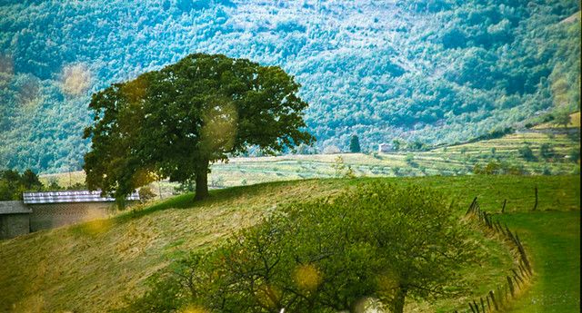Lonely tree somewhere in Italy...