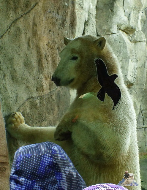 Zoo am Meer 07.03.2015   14