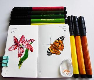 """"""" Tulip & Butterfly """""""