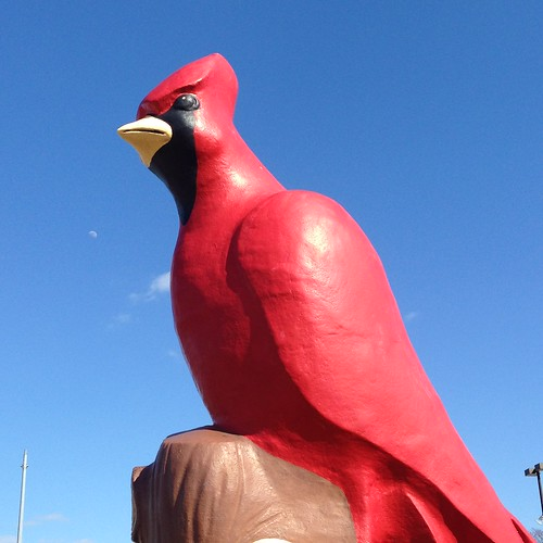 ohio fairgrounds cardinal