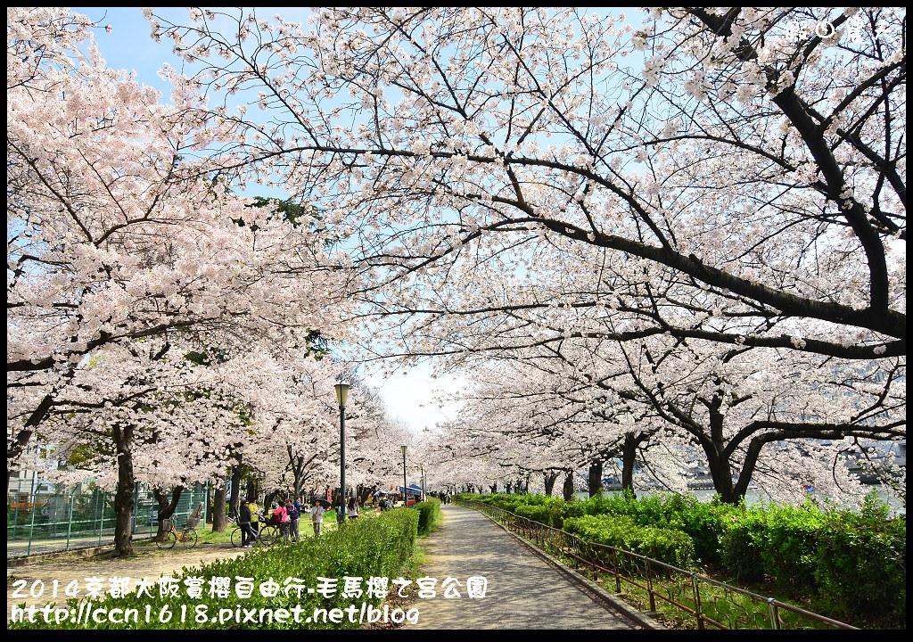 2014京都大阪賞櫻自由行-毛馬櫻之宮公園DSC_2080