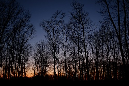 trees silhouette bluehour sooc aubergedesgallant x100s 2152015 image48215 215in2015