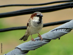 Aves - Birds 2