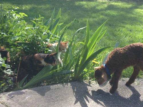 meeting kitties