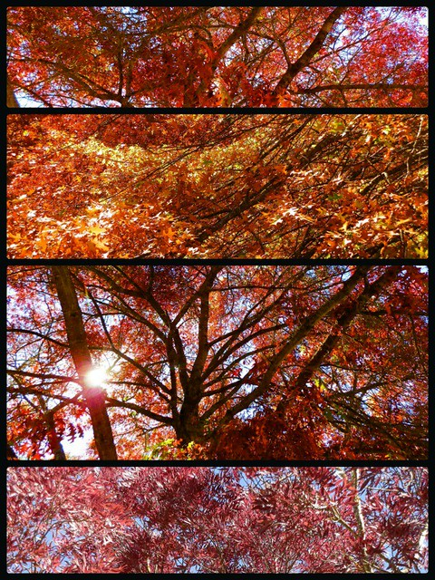 Red Random Collage