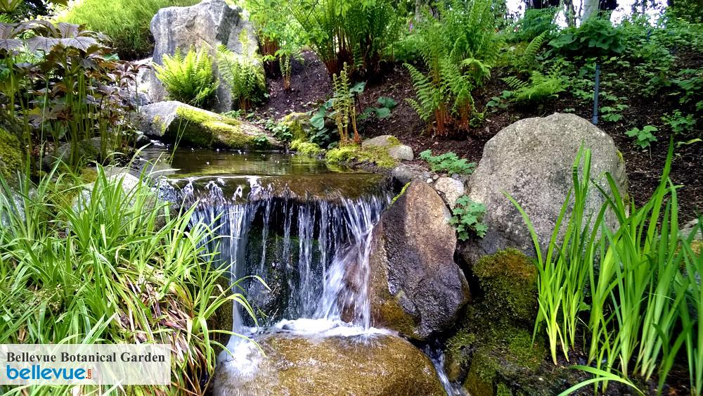 Bellevue Botanical Garden Hours Garden Ftempo