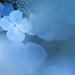 hydrangea by shin7d