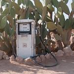 Cactus y gasolina