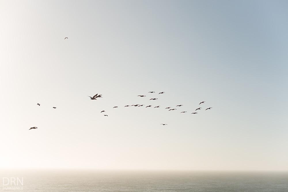 Flocks.