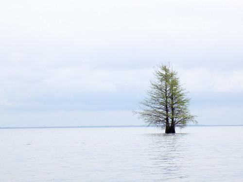Lake Marion Plantation Islands-24