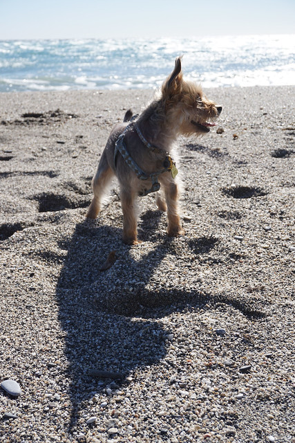 Luna on the beach