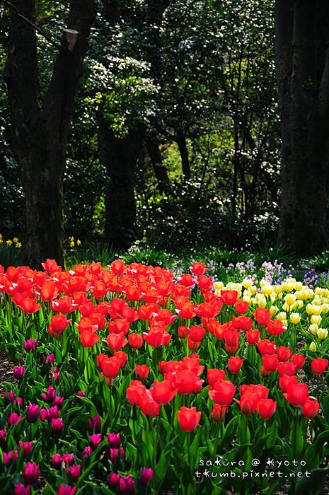 京都府立植物園 (1).jpg