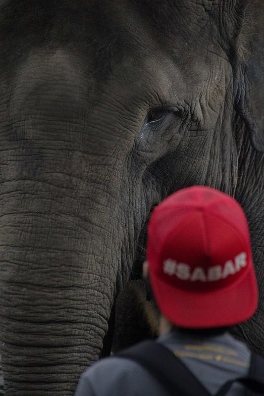 Gajah, yang Sabar ya..