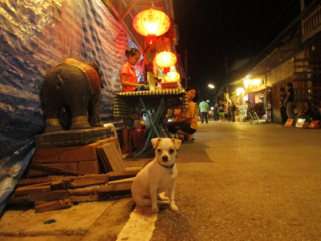 Dog on the Street of Chiang Khan in Loei Province, Thailand. March 24, 2015.