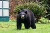 Spring Bear 2