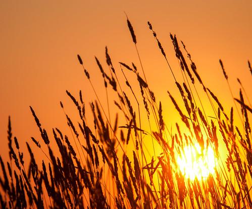 autumn sunset plants nature field sunshine evening russia ngc sunrays
